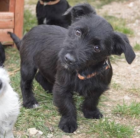 dackel jack russel terrier mischling elody welpe n. Black Bedroom Furniture Sets. Home Design Ideas