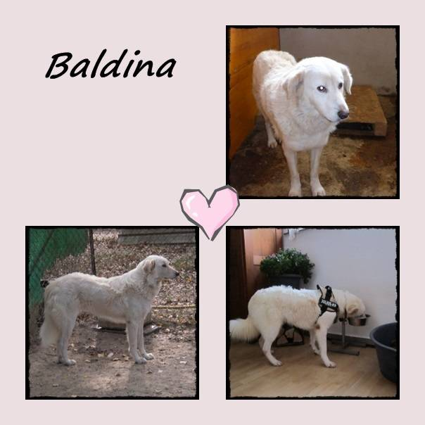 Bild_upload Baldina