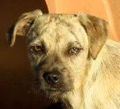 mischling notfall welpe trevor sucht ein zuhause denia dogs e v doreen kr plien aus. Black Bedroom Furniture Sets. Home Design Ideas