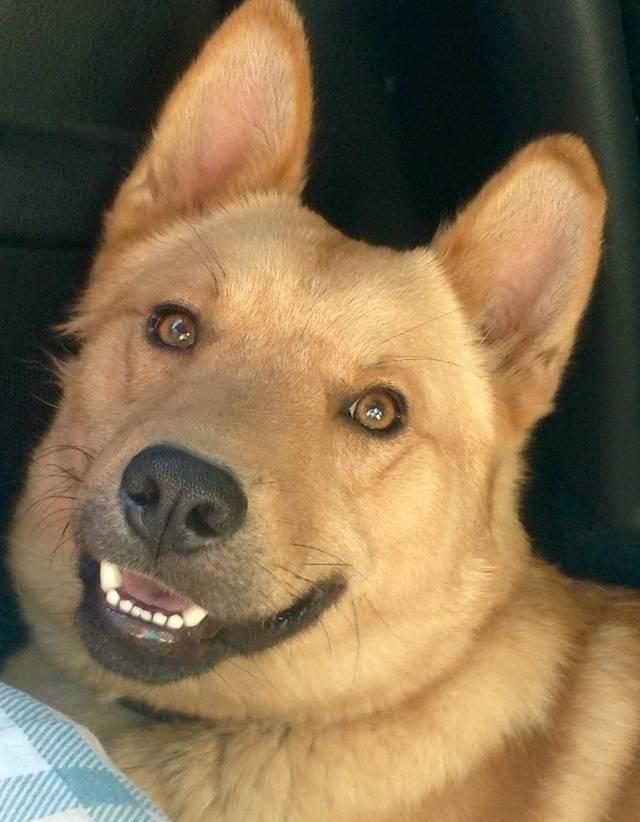 Bild_upload Dingo