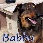 Babbu - Snoopy, my l