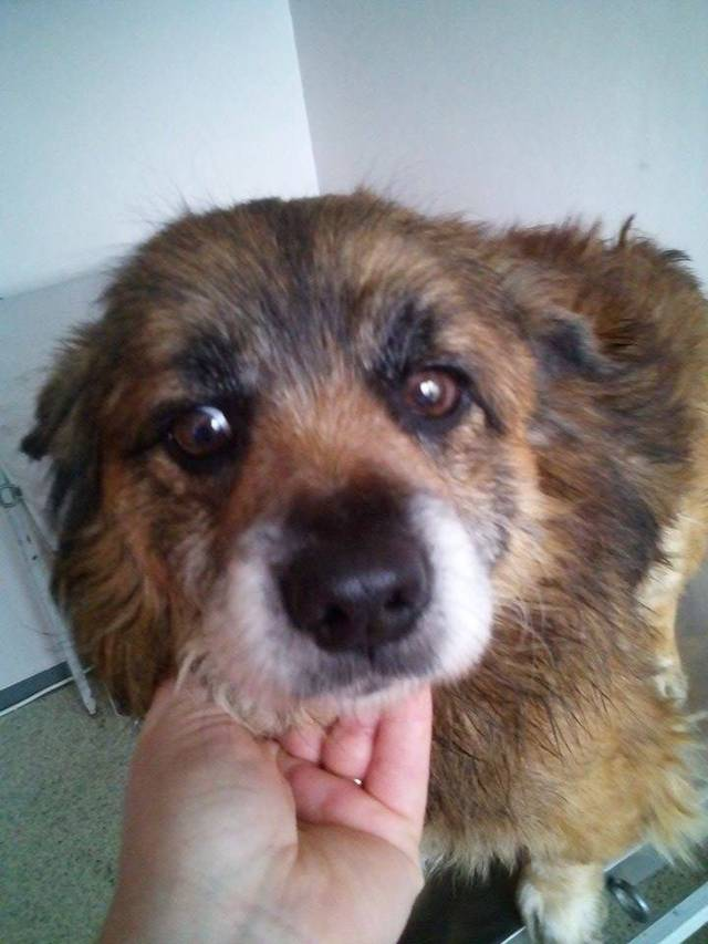 Hundevermittlung Im Internet Der Aktuelle Blick In Die