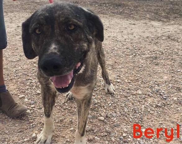 Bild_upload Beryl