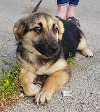 Couch gesucht - Hundevermittlung ::: Datenbank für Hunde in Not ...