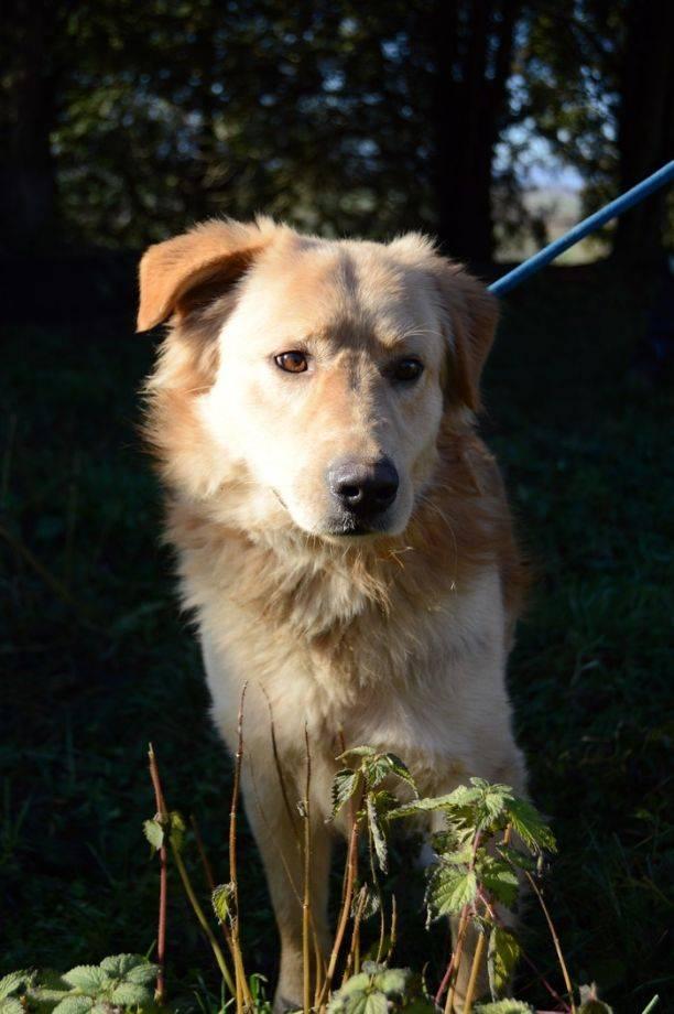 Couch Gesucht Hundevermittlung Datenbank Für Hunde In Not
