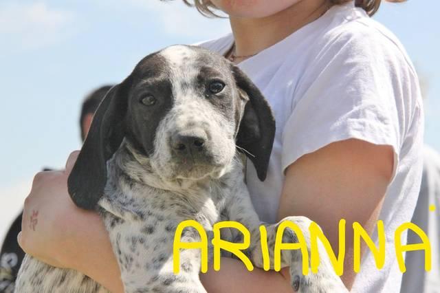 Bild_upload Arianna