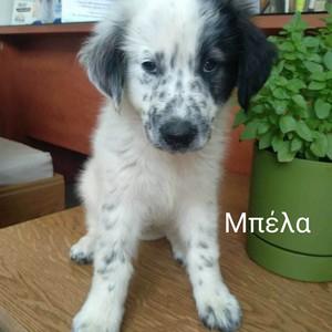 Patras Hunde E V Hundevermittlung Hilfe Fur Unsere Hunde