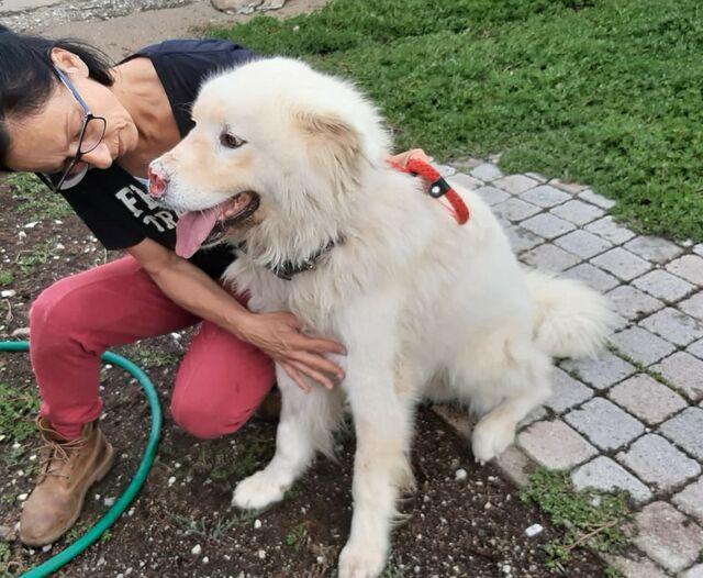 Achille (Maremmano Mix 6 Jahre) von Hundehilfe Mariechen e ...