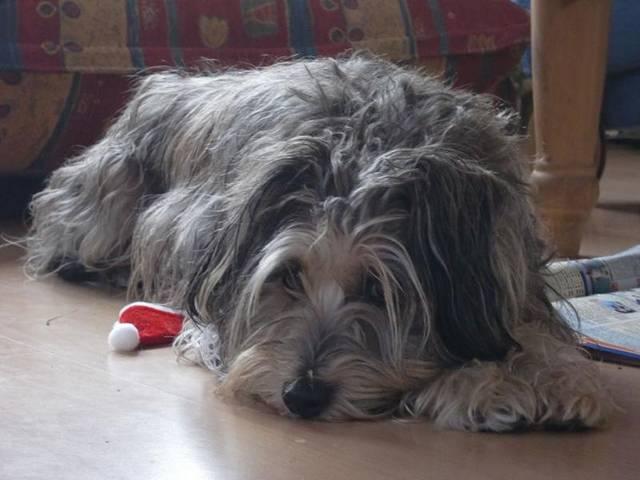 Vivala Hund