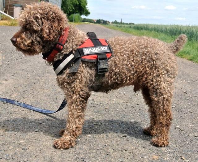Happy End Capitan Spanischer Wasserhund Mix R 252 De Zuhause Gefunden Tierbestandsbuch Archiv