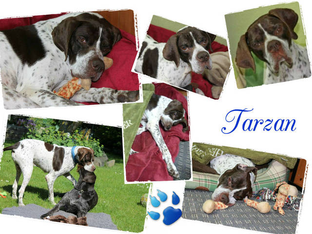 Bild2 Tarzan