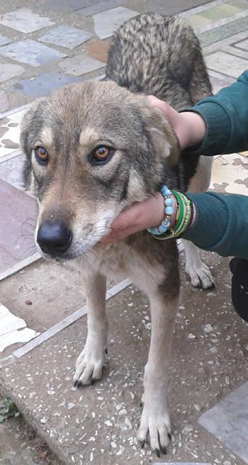 Laika der erste Hund im Weltall - MyDog365 Magazin