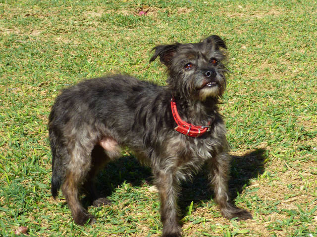 hundevermittlung basti schnauzer cairn terrier mischling r de sucht ein zuhause tini. Black Bedroom Furniture Sets. Home Design Ideas