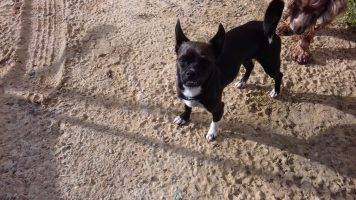 Couch Gesucht Hunde