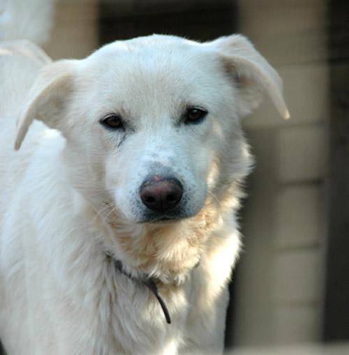Wei 223 Er Sch 228 Ferhund Labrador Mischling Nepo Th R 252 De Zuhause Gefunden Tierhilfe