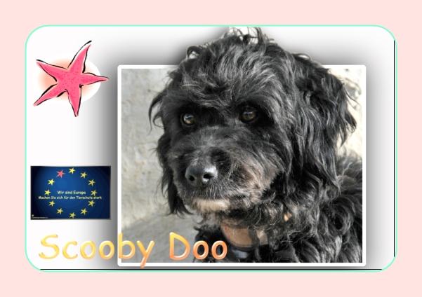 happy end scooby doo spanischer wasserhund mischling r de zuhause gefunden. Black Bedroom Furniture Sets. Home Design Ideas