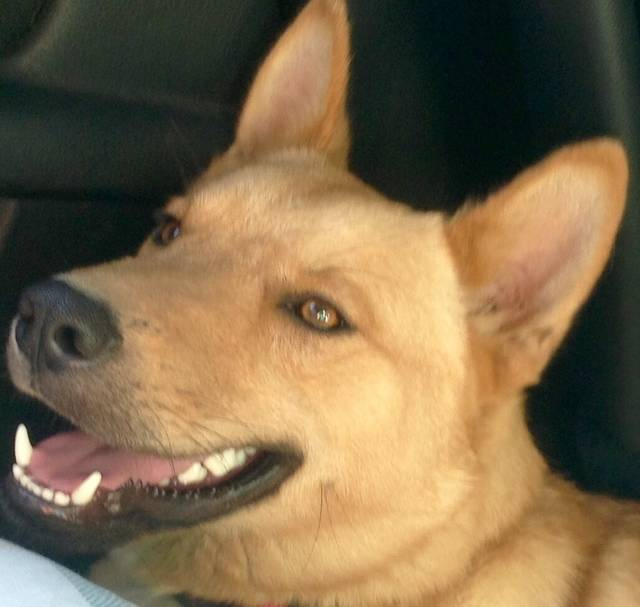 Bild3 Dingo