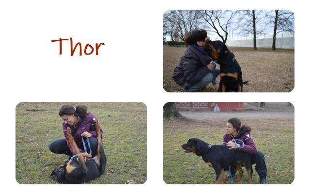 Bild3 Thor II