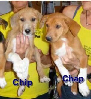 Bild5 Chip ♂