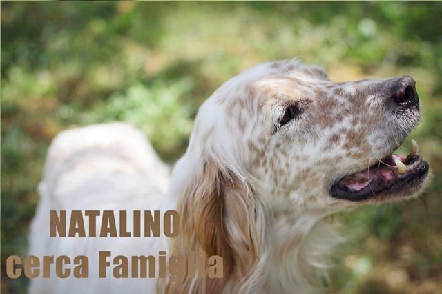Bild6 Natalino
