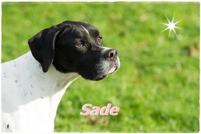 Bild8 Sade