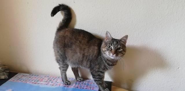 Katze Nora