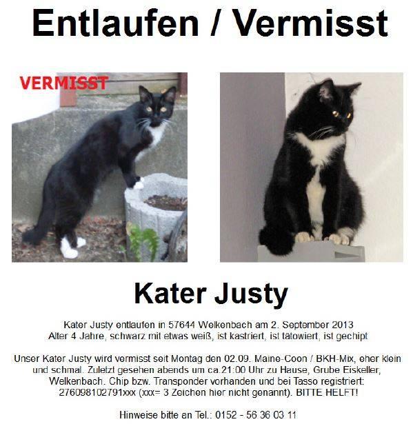 Tiersuchmeldung Mainecoon Bkh Mix Justy Gesucht In Welkenbach Online Suchanzeige Id 1129