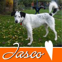 Anzeige JASCO lesen