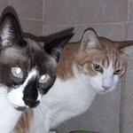 Tommy und Lilly