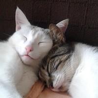Tommy und Mimi