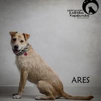 Anzeige Ares lesen