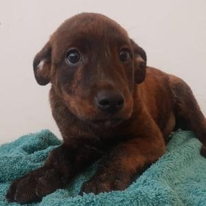 Hundevermittlung Das Online Tierheim Mit 6 000 Hunde Sucht Deine Hilfe Die Seriose Und Verantwortungsbewusste Tiervermittlung Zergportal De