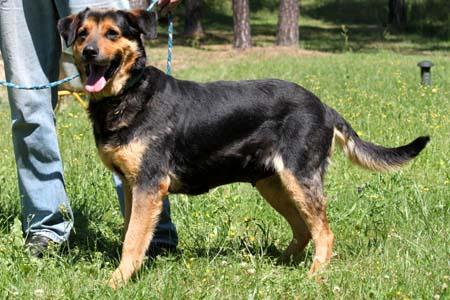 Berner Sennenhund Schaferhund Mix Mona Hundin Zuhause Gefunden Tierschutzliga Dorf Happy Ends Archiv Von Zergportal De